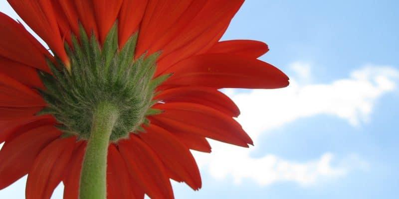 primavera consejos ayurveda